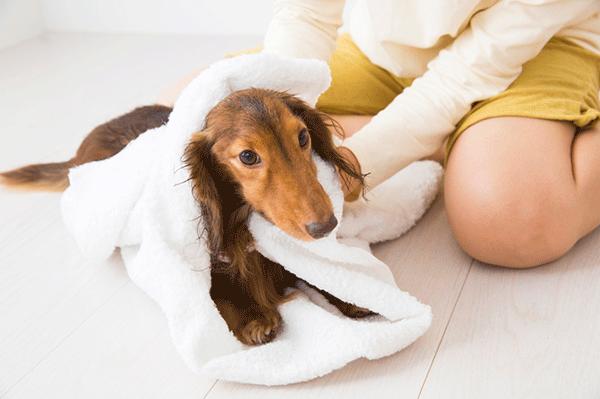 3.水(外壁洗浄)ペットにどのような影響がある?
